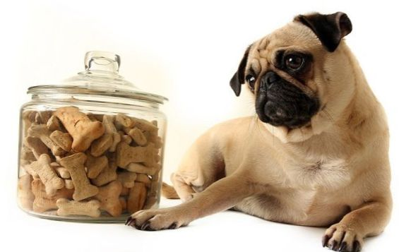 Symptoms of obesity in dogs