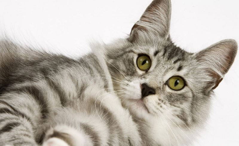 Best cat diet.  Is science diet good for cats?