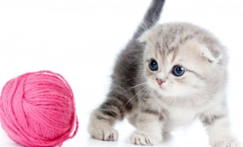 How to choose science diet for kittens