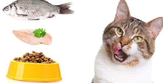 Best Wet Food For Cats With Urinary Tract Problems